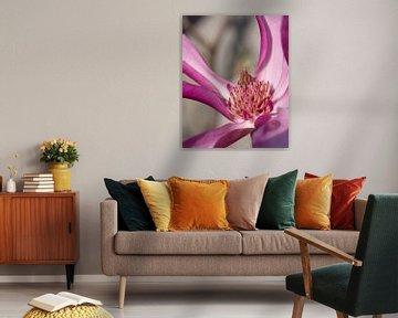 Magnolia (Magnolia liliiflora) van Alexander Ludwig