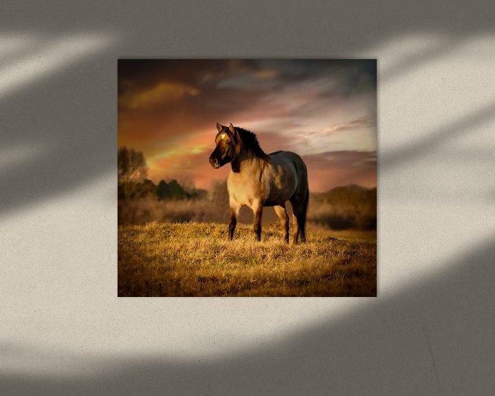 Beispiel: Koninkspaard bei Sonnenuntergang von Marjolein van Middelkoop