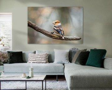 Apfelfink von Linda Raaphorst