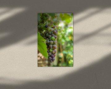 Weintraube von Hanneke Bantje