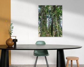 Nebelwald #4 von Hanneke Bantje