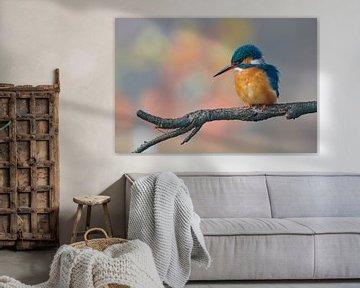 Le martin-pêcheur dans de belles couleurs pastel