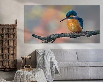 Martin-pêcheur en couleurs pastel, taille du panorama