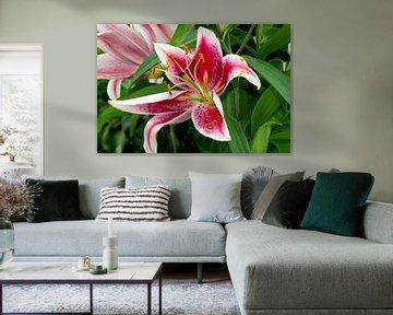 Orchidee 'look a like' auf der großen rosa Lilie von JM de Jong-Jansen