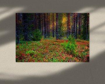 Kleurrijk bos van Sam Mannaerts