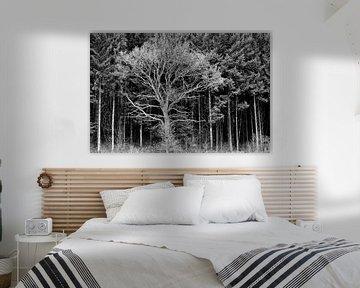 Baum gegen Kiefernwald von Sam Mannaerts
