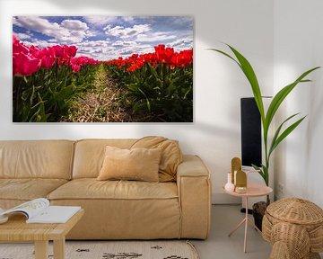 Rode en rozen tulpen in volle bloei van Schram Fotografie