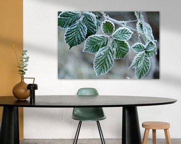 Groene bladeren met een laagje ijs van Schram Fotografie
