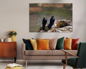 Kraaien genieten van uitzicht vanaf de Tafelberg van Frits Schulte