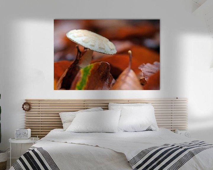Beispiel: Herbstpilz von Borg Enders