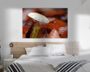 Herbstpilz