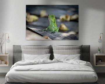 Groene Leguaan van Visual Approach
