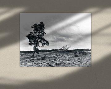 Paysage en noir et blanc avec un arbre solitaire sur Giovanni de Deugd