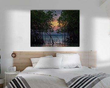 Indonesië - Lombok - Zonsondergang achter een mangrovebos