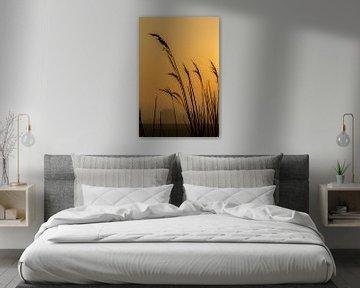 silhouet van riet met gele lucht van FHoo