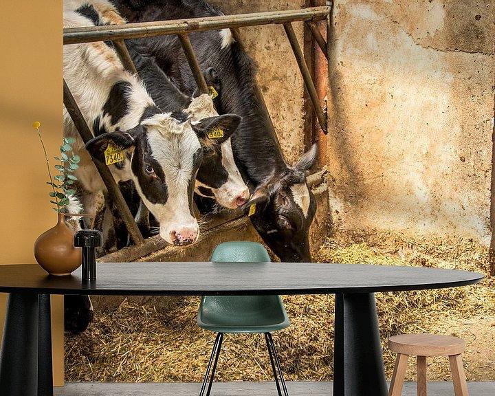 Sfeerimpressie behang: Koeien in een stal in zonlicht van Jille Zuidema