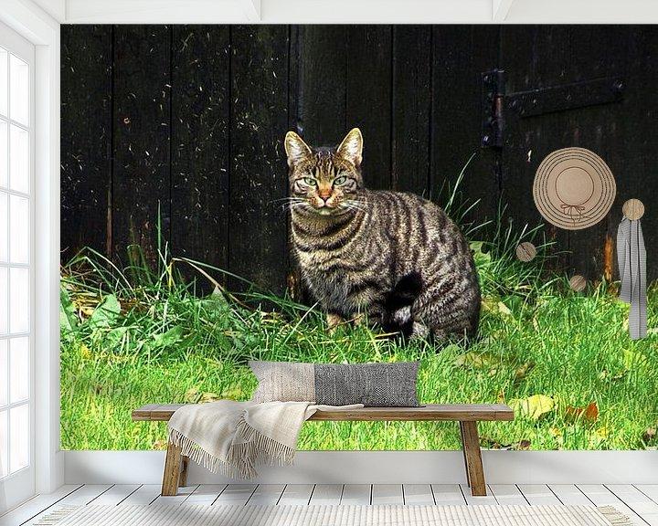 Beispiel fototapete: Gestreifte Hauskatze von Norbert Sülzner