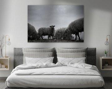 troupeau de moutons sur Teun Gerritsen