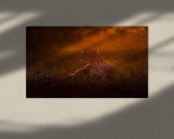 Sonnenaufgang in der Masai Mara! von Robert Kok