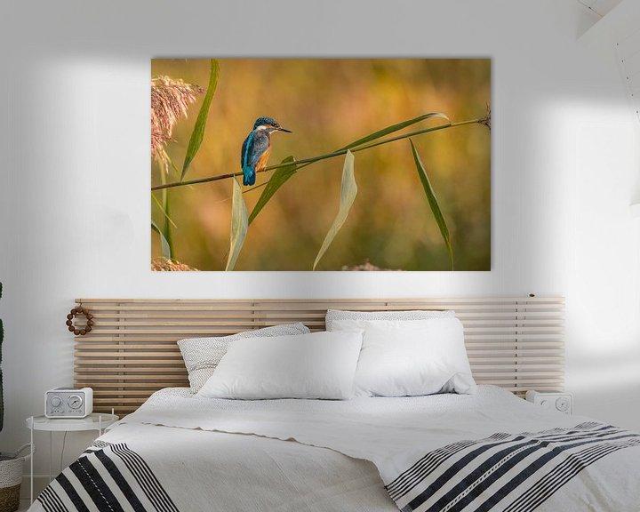Sfeerimpressie: Ijsvogel in de ochtend van Ard Jan Grimbergen