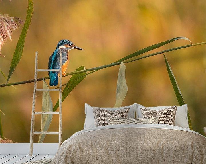 Sfeerimpressie behang: Ijsvogel in de ochtend van Ard Jan Grimbergen