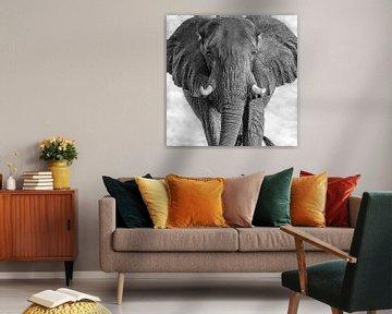 Oog in oog met een Afrikaanse Olifant van Michael Kuijl