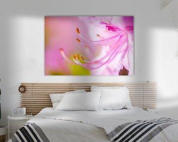 LP 70482635 Gros plan d'une fleur rose sur BeeldigBeeld Food & Lifestyle