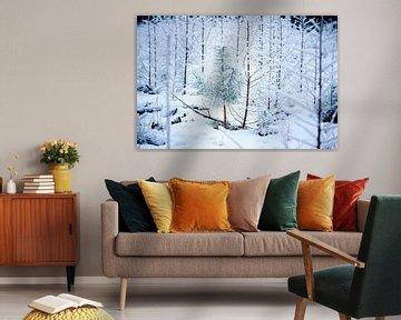 Kiefer in einem Winterwald von Karijn | Fine art Natuur en Reis Fotografie