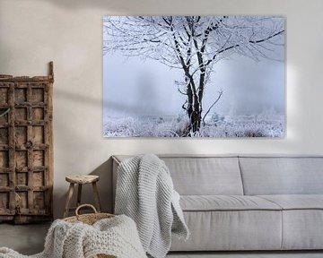 Baum im Moor, mit Schnee bedeckt von Karijn | Fine art Natuur en Reis Fotografie