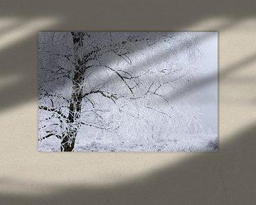Winterbaum von Karijn | Fine art Natuur en Reis Fotografie