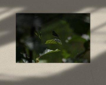 De vlieger op het blad van Yoanique Essink