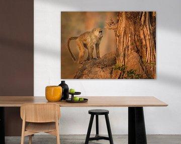 Afrikaanse Baviaan in de boom