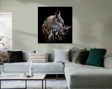Europese Oehoe Uil