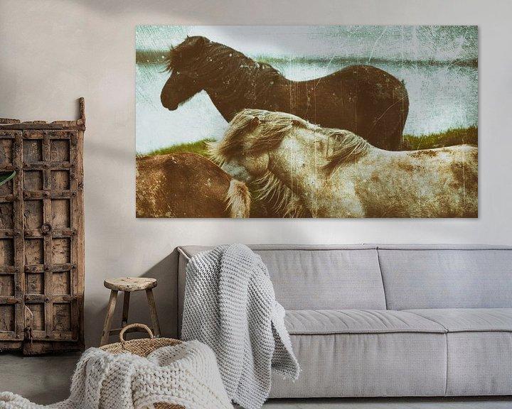 Beispiel: Rispað 2 von Islandpferde    IJslandse paarden   Icelandic horses