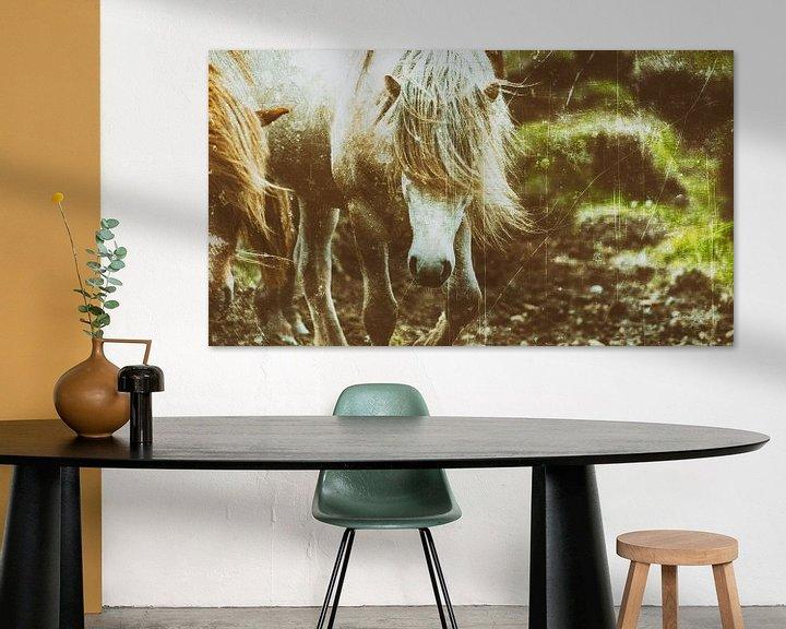 Beispiel: Rispað 3 von Islandpferde    IJslandse paarden   Icelandic horses