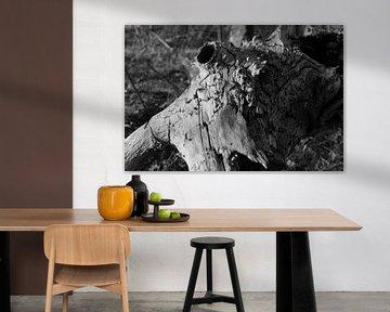 Baumstumpf. von Robbie Buur