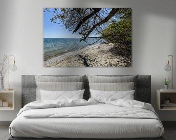 Am Ufer in der Goor, Insel Vilm, Lauterbach auf Rügen von GH Foto & Artdesign