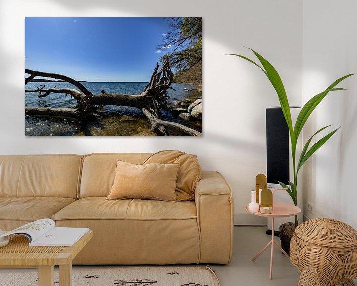 Beispiel: Baumstamm am Ufer in der Goor, Insel Vilm, Lauterbach auf Rügen von GH Foto & Artdesign