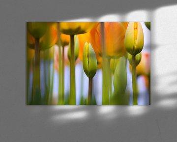 LP 70482603 Gele tulpen van BeeldigBeeld Food & Lifestyle