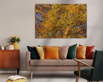 Kleurrijke herfstbladeren aan een beuk , Duitsland van Torsten Krüger