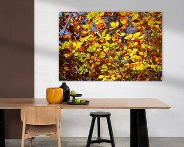 Kleurrijke herfstbladeren aan een beuk van Torsten Krüger