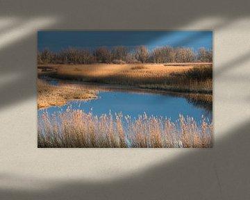 Een mooie winterdag in de polder van Koen Hoekemeijer