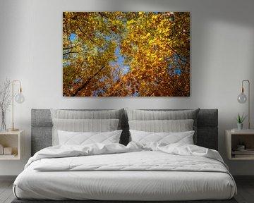 Im Herbst beginnen sich die Blätter langsam zu färben von Idema Media