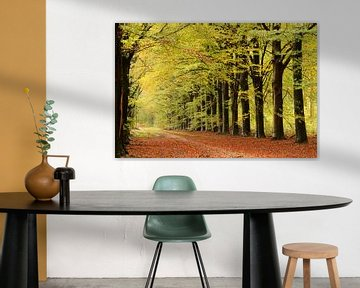 Lumière d'automne sur Marjo Snellenburg