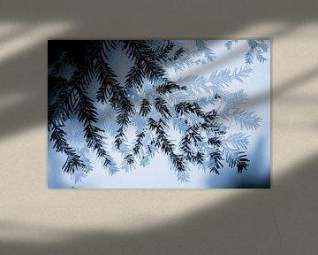 Abstraktion von Nadelbaum von Sam Mannaerts