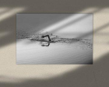 Schwimmer im Wasser von Robin van Steen