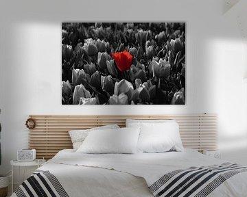 Die rote Tulpe springt heraus von Renzo de Jonge