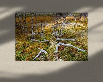 Gefällter Baum in Sprachlandschaft von Sam Mannaerts