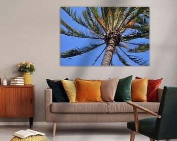 Couronne d'un palmier dans le parc Palmeral d'Elche, en Espagne, sous un ciel bleu clair.