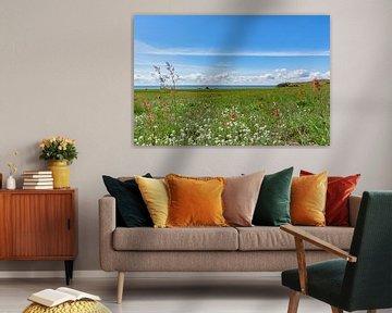 Maïspapaver en weidebloemen, Groß Zicker, Rügen van GH Foto & Artdesign